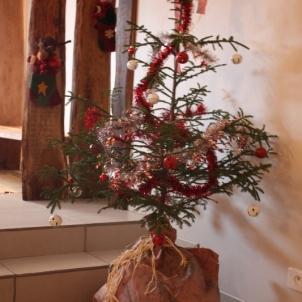 Pour Noël, le sapin était là !