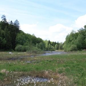 A 35 minutes du Vieux Grenier, l'étang de la Comtesse, transformé petit-à-petit en tourbière