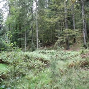 La forêt, proche du Gîte