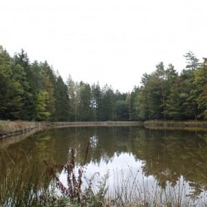 L'étang Nicole